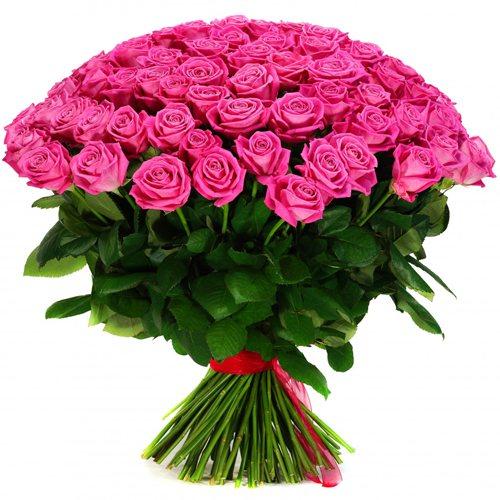 красивые фото розы розовые